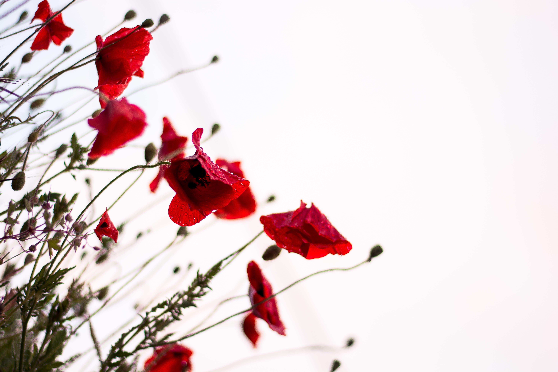 """L'amore, quando si rivela"" di Fernando Pessoa"