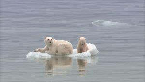 Global warming. Allarme estinzione per il riscaldamento globale