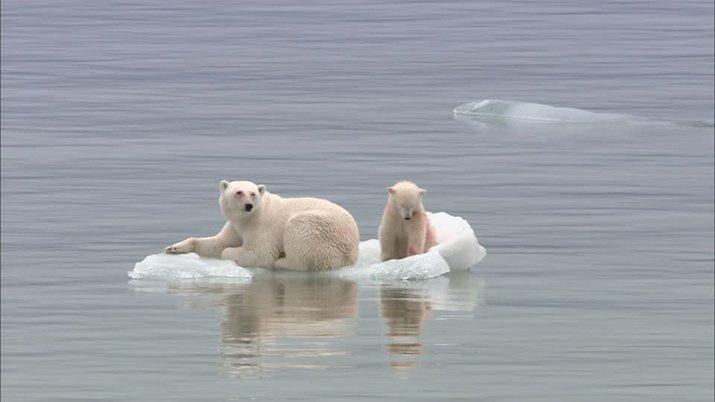Global warming, l'estinzione degli animali per il riscaldamento globale