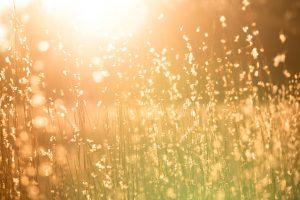 """""""Le quattro stagioni. Estate"""" di Vivaldi. Immagini sonore di una calda giornata estiva"""