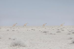 'Land of Nothingness' di Maroesjka Lavigne, la bellezza della Namibia