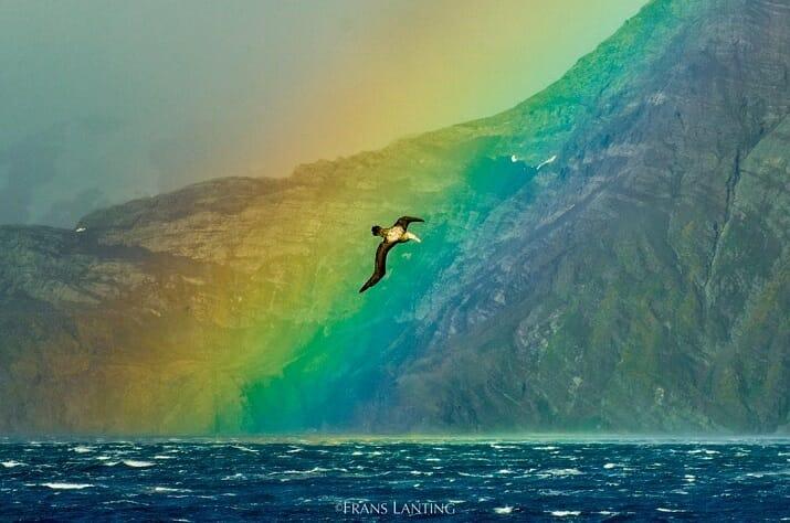 Wildlife di Frans Lanting. Antarctica