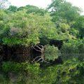 La foresta Amazzonica ha i diritti di un essere umano