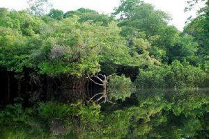 La foresta Amazzonica ha gli stessi diritti di un essere umano