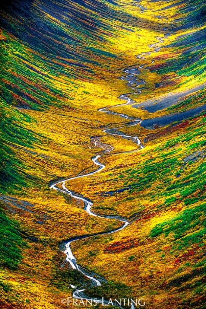 Wildlife di Frans Lanting. Tundra valley, Alaska