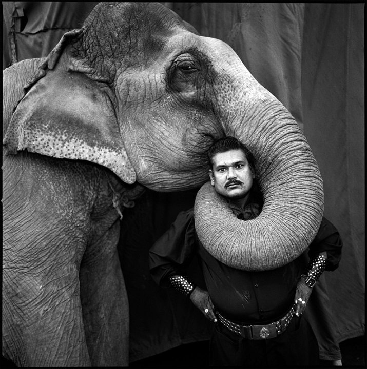 Animal trainer and an elephant di Mary Ellen Mark