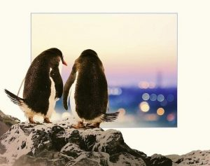Pinguini Tattici Nucleari con Fuori dall