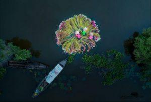 """Butterfly"" di Thien Nguyen"
