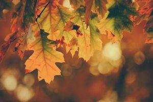 'Le quattro stagioni. Autunno' di Vivaldi. Il ciclo del tempo