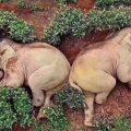 Fake News sugli animali