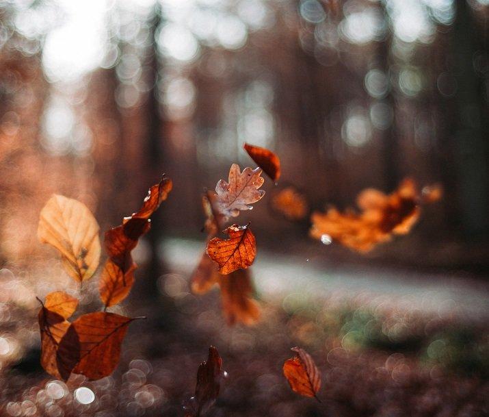 """""""Vedere cadere le foglie"""" di Nazim Hikmet"""
