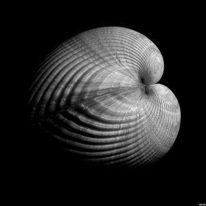 Conchiglia di Edward Weston