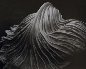 Foglia di cavolo di Edward Weston
