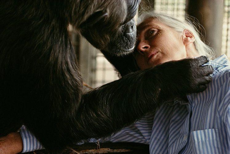 """""""Brutal kinship"""" di Nick Nichols e Jane Goodall con gli scimpanzé"""