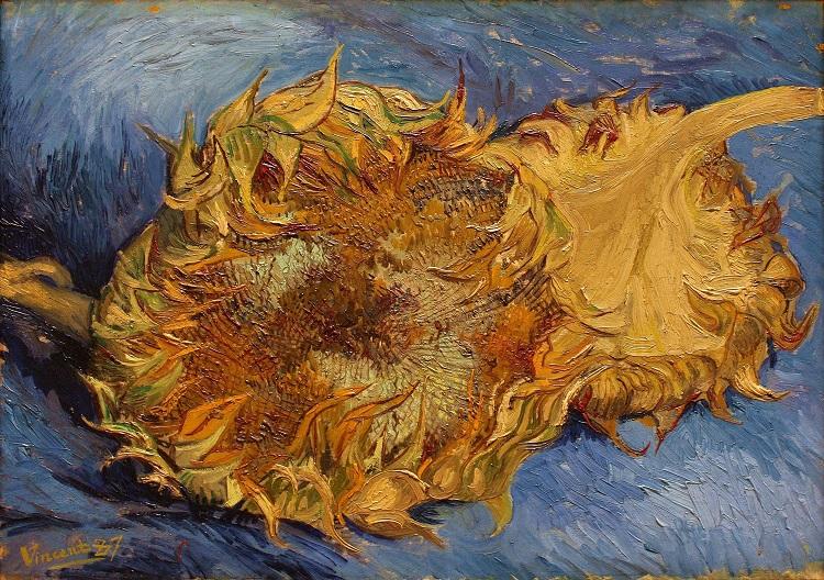 """""""Due girasoli appassiti"""" di Vincent van Gogh"""