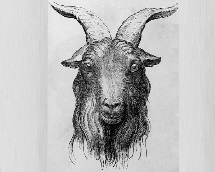 Elogio della capra dal mito alle arti
