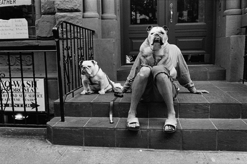 """""""Bulldog"""" di Elliott Erwitt"""