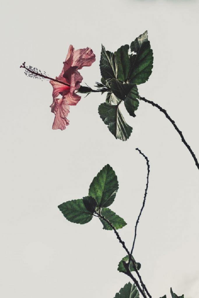 Voglio un amore doloroso di Gabriele D'Annunzio